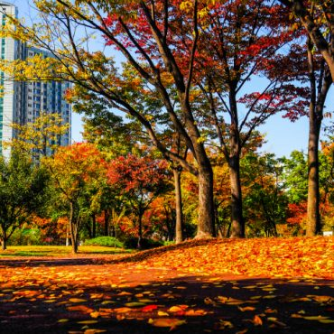 Сеул: Осенний романс