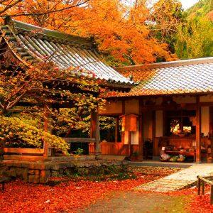 tokyo_autumn