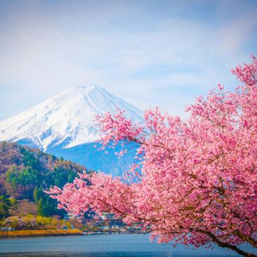 Токио: вчера и сегодня (сакура 2020)