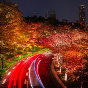 Japan_Tokyo_Roads_Autumn_Trees_Night_539216_1280x897