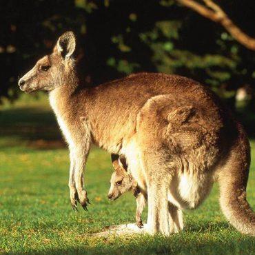 Классическая Австралия