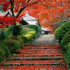 Japan_Autumn_27_ed